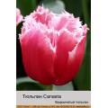 Бахромчатые тюльпаны (38)
