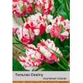 Попугайные тюльпаны (8)
