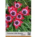 Видовой тюльпан (spec.) (5)