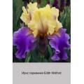 Ирис германика (Iris germ.)
