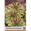 Молочай (Euphorbia) (1)