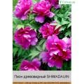Пион деревовидный (Украина) (2)