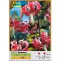 Видовые лилии
