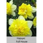Нарцисс Full House