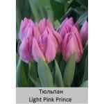 Light Pink Prince