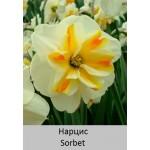 Нарцисс Sorbet