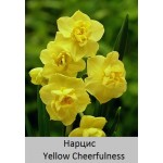 Нарцисс Yellow Cheerfulness