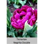 Negrita Double