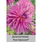 Дихелостемма Pink Diamond®