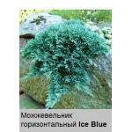 Можжевельник горизонтальный Ice Blue