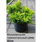 Можжевельник горизонтальный Lime Glow