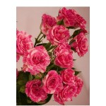 Роза Pink flash