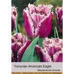 Тюльпан American Eagle