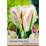 Тюльпан China Town