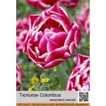 Тюльпан Columbus