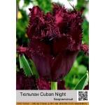 Тюльпан Cuban Night