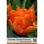Тюльпан махровый поздний Orange Princess