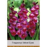 Гладиолус Velvet Eyes