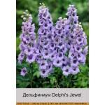 Дельфиниум Delphi's Jewel