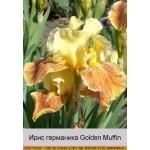 Ирис германика Golden Muffin