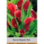 Калла  (Zantedeschia) Majestic Red