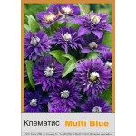 Клематис (Clematis) Multi Blue