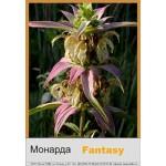 Монарда Fantasy