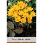 Крокус Golden Yellow