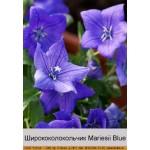 Ширококолокольчик Mariesii Blue