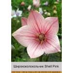 Ширококолокольчик Shell Pink