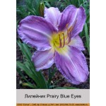 Лилейник  Prairy Blue Eyes