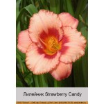 Лилейник   Strawberry Candy