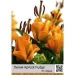 ЛА гибрид Apricot Fudge