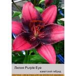 Азиатский гибрид  двухцветный Purple Eye