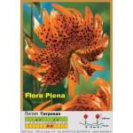 Тигровая махровая лилия Flora Plena