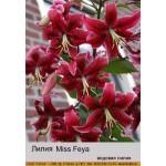 Видовая лилия  Miss Feya