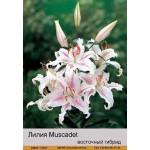 Восточный гибрид Muscadet