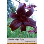 Тигровая лилия Night Flyer