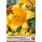 Трубчатая лилия Orange Planet