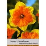 Нарцис Mondragon