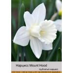 Нарцис Mount Hood