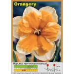 Разрезнокорончатый нарцисс Orangery