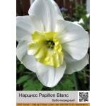Бабочковидный нарцисс Papillon Blanc