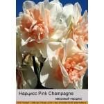 Махровый нарцисс Pink Champagne