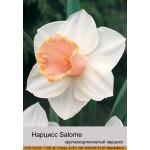 Нарцис крупнокорончатый  Salome