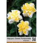 Махровый нарцисс Sweet Pomponette