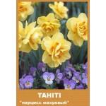 Нарцис Tahiti