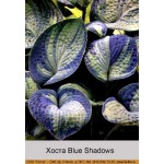 Хоста Blue Shadows