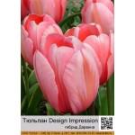 Тюльпан Design Impression