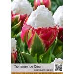 Тюльпан Ice Cream